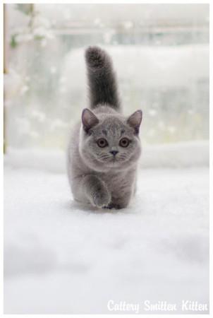 Ons klein smurfje in de sneeuw :)