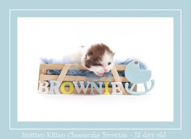 Brownie foto naam