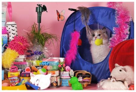 En natuurlijk helpen de kittens om het kittenpakket samen te stellen :)